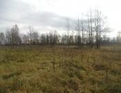 На 500 га смоленской земли вырастили «урожай древесно-кустарниковой растительности»