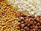 О выявлении некачественной крупы в брянском предприятии общественного питания «Березка»