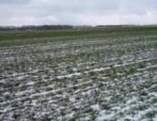 Клетнянский сельскохозяйственный кооператив  «Синицкое» украсил посевы озимой ржи сорняками