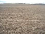 Более 100 га земель сельскохозяйственного назначения введено в оборот в Глинковском районе Смоленской области