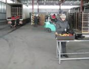 Фитосанитарный контроль в складах временного хранения и пунктах пропуска Брянской и Смоленской областей