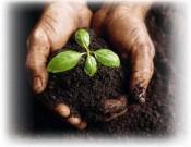 Сельскохозяйственный производитель обязан обеспечивать плодородие своих земель