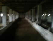 Молочно-товарная ферма СПК «Корна» нарушает технический регламент на молоко