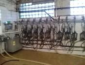 Контроль качества и безопасности молока должен начинаться на молочно-товарной ферме