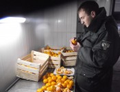 Об обнаружении карантинного вредителя в хорватской растительной продукции