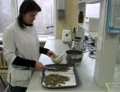 Надзор за качественным состоянием земель сельскохозяйственного назначения Брянской и Смоленской областей