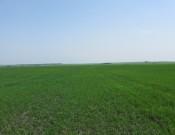 Управление Россельхознадзора обязало товарищество на вере «Заулье» принять меры по исполнению земельного законодательства Российской Федерации