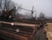 Должностные лица   ООО «Столярные изделия» не исполняют обязательные мероприятия в карантинной фитосанитарной зоне по стволовым вредителям леса