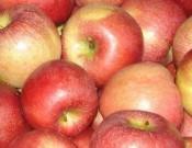 О выявлении каратнинного вредителя в партии молдавских яблок