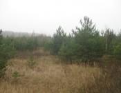 В Брянской области более 900 га сельскохозяйственных земель заросли сорной растительностью