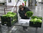 Итальянским экспортерам вернули зараженный салат