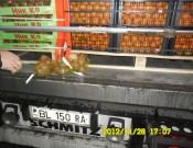 Партия греческих мандаринов зараженных карантинным объектом возвращена экспортерам