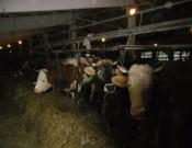 Система производственного контроля молока в СПК «Правда» не предусмотрена