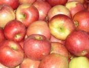 Яблоки возвращены в Молдову