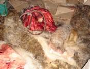 В Брянской области пресечена попытка незаконной перевозки говядины