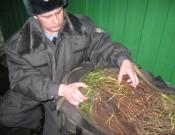 Начался сезон незаконного ввоза саженцев из Украины