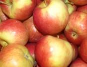 Партия польских яблок возвращена отправителю