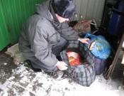 О контроле продукции растительного и животного происхождения в ручной клади и багаже пассажиров, следующих из Украины