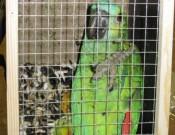 Об очередной попытке контрабандного ввоза птиц в Брянскую область