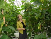 Обеспечение фитосанитарных условий в тепличных хозяйствах