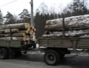 О фактах нарушений при перевозке подкарантинной продукции