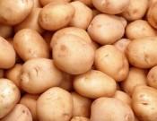 Вниманию сельхозпроизводителей, планирующих экспорт картофеля на территорию Украины