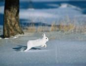 Сложившаяся эпизоотическая ситуация требует ответственного подхода к организации и ведению охотничьего хозяйства