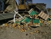 Об уничтожении растительной продукции неподтвержденного качества и безопасности