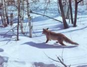 Управление Россельхознадзора по Брянской и Смоленской областям продолжает осуществлять контрольно-надзорные мероприятия в охотничьих хозяйствах
