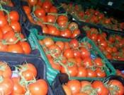 В Смоленской области на полигоне ТКО утилизировано более 46 тонн нелегально ввезенных яблок и томатов неизвестного происхождения, качества и безопасности