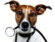 Вниманию владельцев животных и руководителей ветеринарных аптек! В обороте может находиться контрафактный лекарственный препарат «Отибиовет»