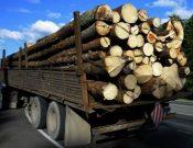 Экспорт лесопродукции с территории Брянской и Смоленской областей