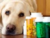 О выявлении несоответствия качества ряда образцов лекарственных препаратов для ветеринарного применения