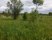 В ходе административного обследования в Почепском районе выявлено более 6 га зарастающих земель сельскохозяйственного назначения