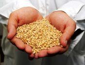 Итоги контроля за оборотом зерна