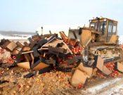 В Брянской области уничтожена подкарантинная продукция неизвестного происхождения