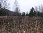В результате административных обследований в Брянской области обнаружено 160 гектаров неиспользуемых земель сельхозназначения