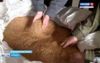 Видео. На Брянщине проверяют семена. Сюжет ГТРК «Брянск»