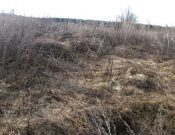 В Брянской области в апреле выявлено более 190 гектаров зарастающих земель сельскохозяйственного назначения