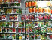 Итоги контроля семян и посадочного материала в местах массовой торговли