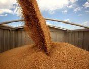Экспортные отгрузки зерна и продуктов его переработки из Брянской и Смоленской областей за неделю превысили 15 тысяч тонн