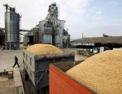 Экспортные отгрузки зерна и продуктов его переработки из Брянской и Смоленской областей