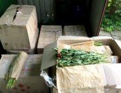 Саженцы роз, срезы пионов, грецкие орехи и семена кукурузы возвращены на сопредельную территорию Украины