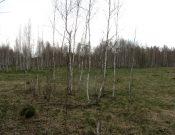В Почепском районе обнаружено более 70 гектаров зарастающих земель сельскохозяйственного назначения