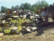 В Смоленской области утилизирована продукция растительного происхождения без документов
