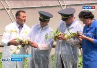 Видео. На Брянщине возродили центр семеноводства. Сюжет ГТРК «Брянск»