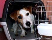 Порядок вывоза за рубеж мелких домашних животных