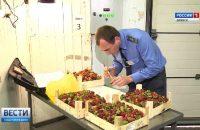 Видео: Фитосанитарный карантинный контроль импортной клубники в Брянской области, ГТРК «Брянск»