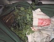 Саженцы роз не прошли контроль в Брянской области