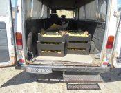 В Брянской области уничтожены яблоки неизвестного происхождения
